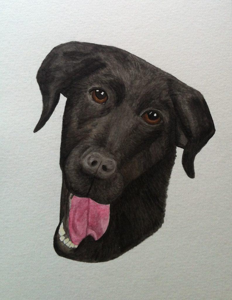 Labrador i akvarell